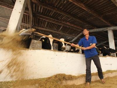 Nông dân đổ bỏ hàng tấn sữa tươi, doanh nghiệp chi tỷ đô nhập sữa nguyên liệu