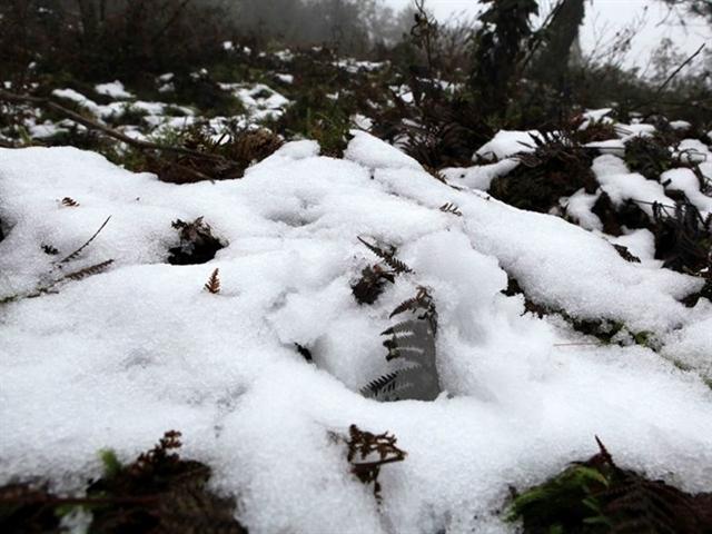 Lào Cai thiệt hại 11 tỷ đồng do mưa tuyết, băng giá và sương muối