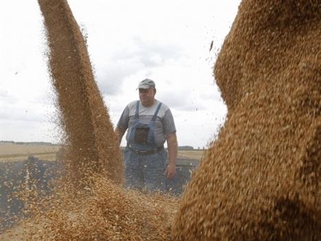 IGC: Tồn kho ngũ cốc toàn cầu 2014-2015 cao nhất 30 năm