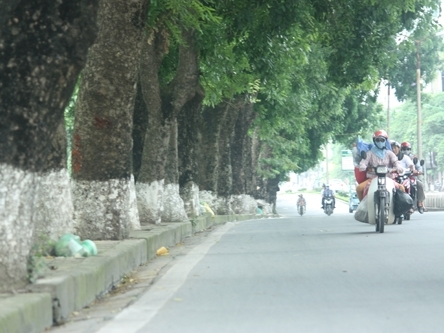 Hà Nội thay thế 6.700 cây xanh trên phố