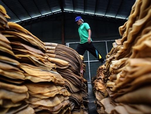 Thái Lan thành lập Liên đoàn Người trồng Cao su giải quyết khó khăn của ngành
