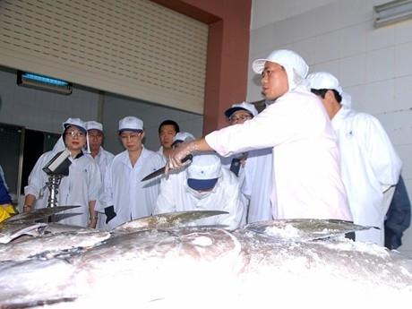 Lô cá ngừ đầu tiên sang Nhật trong năm mới