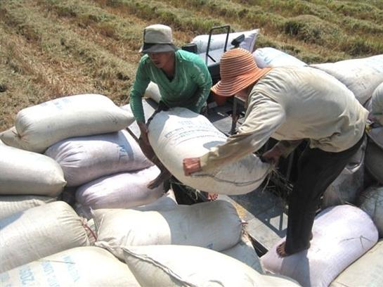 Xuất khẩu gạo năm 2015 phải đảm bảo có lợi cho nông dân