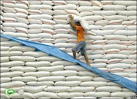 Mua tạm trữ 1 triệu tấn gạo từ 1/3/2015