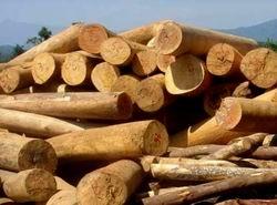 Cấm xuất khẩu một số sản phẩm nông, lâm nghiệp