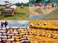 Thực hiện bình ổn giá một số mặt hàng nông nghiệp