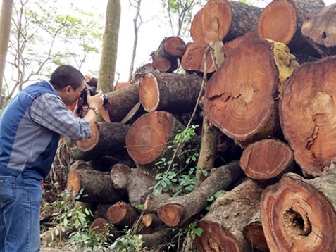Hà Nội thanh tra toàn diện việc thay thế cây xanh