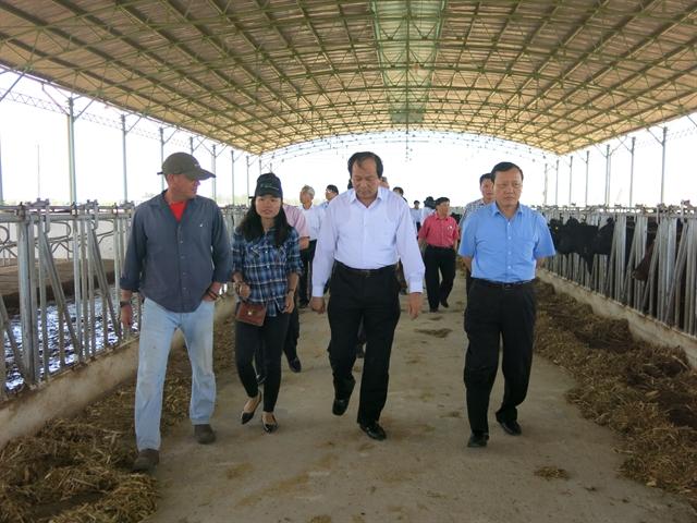 """NutiFood sẽ đầu tư xây dựng """"biệt thự"""" bò mẫu tại Hà Nam"""