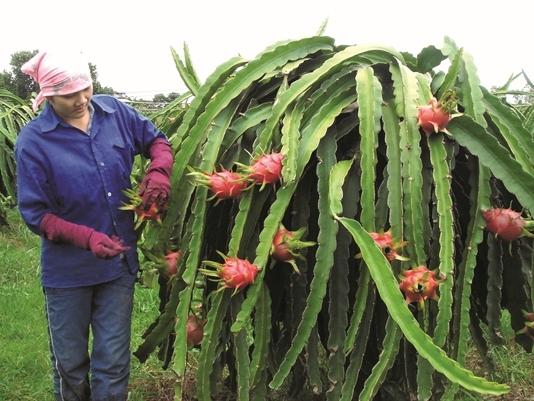 Đầu tư Hàn Quốc hướng vào nông nghiệp Việt