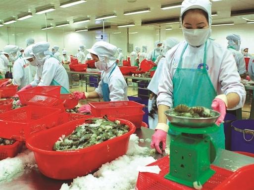 Thủy sản Minh Phú: Sụt giảm tạm thời