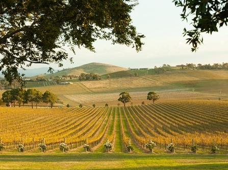 Những vùng sản xuất rượu vang đang trỗi dậy