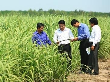 CTCP Mía đường Thành Thành Công – Tây Ninh: Sẵn sàng hội nhập