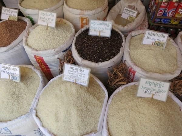 Gạo thơm Jasmine của Campuchia được thế giới ưa chuộng