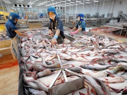 Xuất khẩu cá tra vào Anh tăng mạnh
