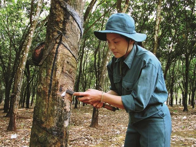 Cao su Đồng Phú tính kế thoát lầy