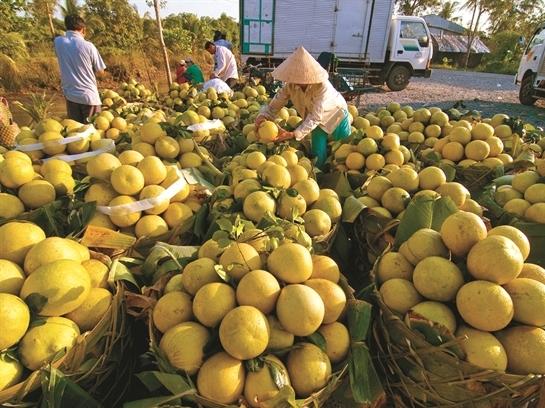 Cơ hội lớn từ sàn giao dịch nông sản
