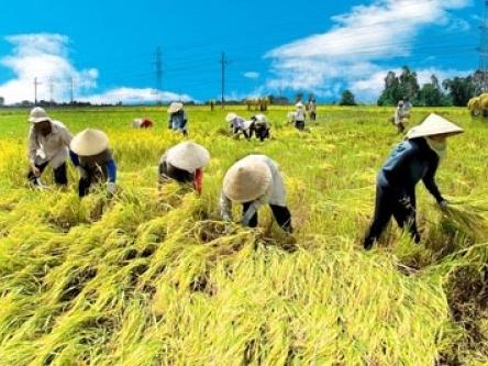 Nhật muốn sản xuất, chế biến gạo tại Việt Nam