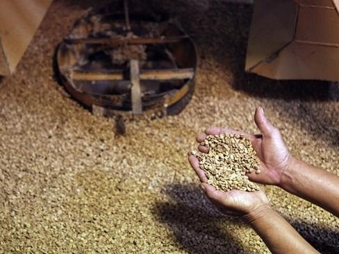 Bản tin thị trường cà phê ngày 1/8