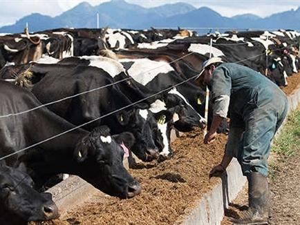 3 nguyên nhân khiến giá sữa toàn cầu giảm đến 2/3