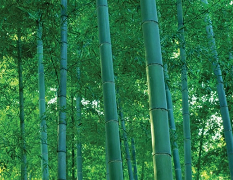 Bamboo Capital rót 280 triệu đồng vào ACG Việt Nam