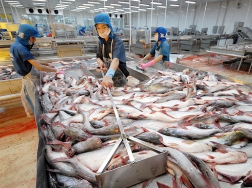 Cá tra lại bị áp thuế chống bán phá giá tại Mỹ