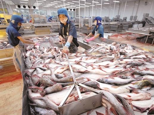 Vĩnh Hoàn vững bền với cá tra