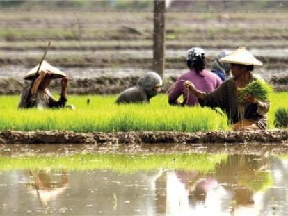 Việt Nam trúng thầu xuất khẩu 450.000 tấn gạo sang Philippines