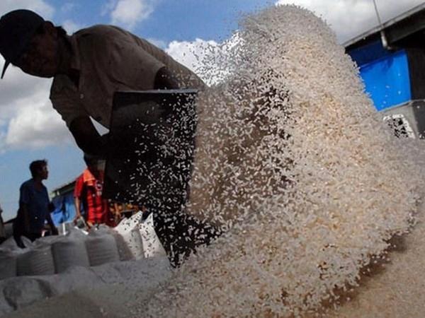 Indonesia dự báo thiếu hụt gạo dự trữ trong năm 2016