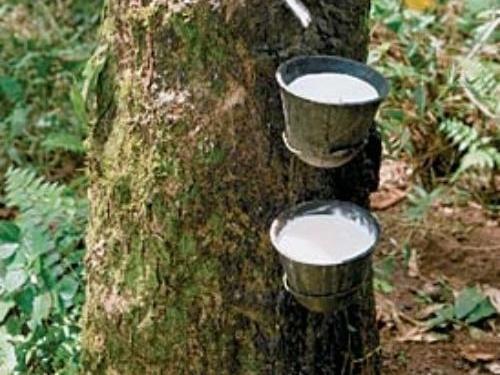IRCo: Có thể thiếu hụt nguồn cung cao su thiên nhiên