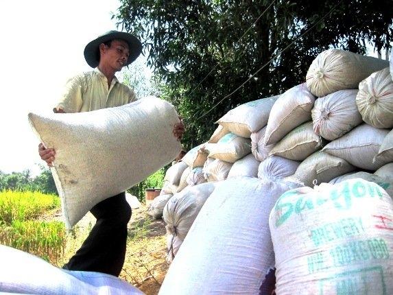 Lúa gạo ĐBSCL đang lên cơn sốt