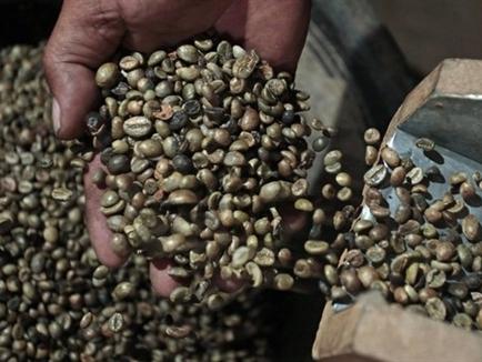 Bản tin thị trường cà phê ngày 18/11