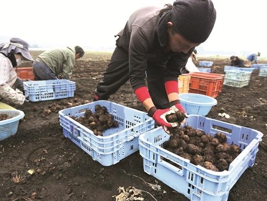 Bài học cải tiến nông nghiệp từ người Nhật