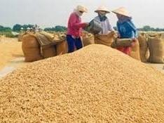 VN xuất cả gạo lẫn cà phê chưa đủ tiền nhập ôtô