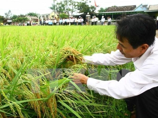 Giảm khoảng 100.000ha đất trồng lúa trong năm 2016