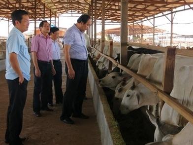 Doanh nghiệp Việt đầu tư 500 triệu USD sang Nga nuôi bò