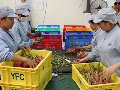Hàng Việt xuất ngoại đầu năm