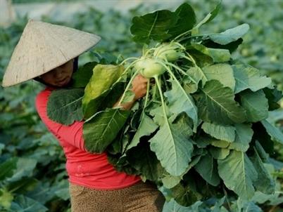 Bloomberg: Kinh tế Việt Nam tiếp tục là điểm sáng trong năm 2016-2017