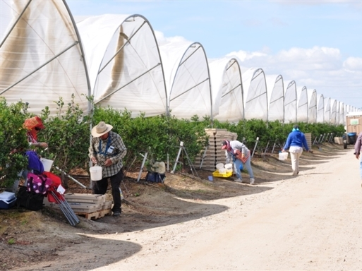 F123 phân phối việt quất khô vào Việt Nam