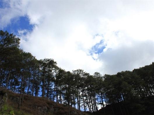 Việt Nam vào top 10 nước có diện tích rừng tăng nhiều nhất thế giới