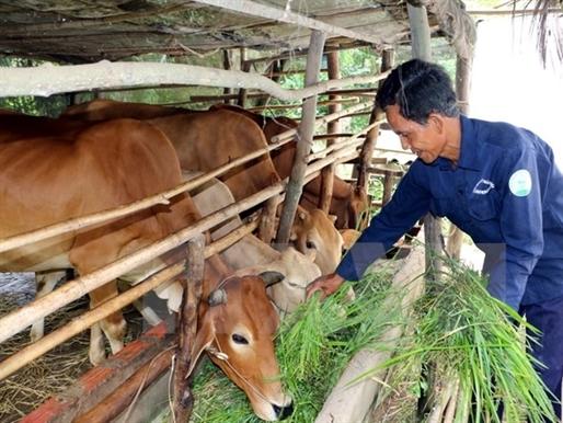 Quảng Ninh cấp phép dự án nuôi bò 2.000 tỷ đồng ở vùng biên