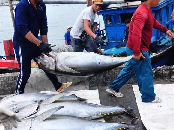 Mỗi năm Việt Nam nhập 5.000 tấn cá ngừ đại dương