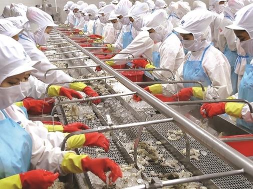 Thủy sản Minh Phú gặp hạn