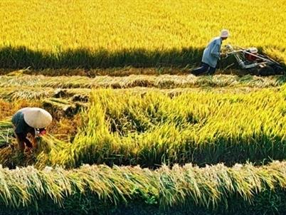 Đất trồng lúa: Thừa và thiếu