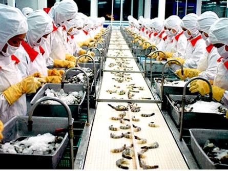 Thủy sản Minh Phú báo lãi quý I giảm 33%
