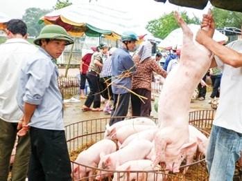Bộ Công thương cảnh báo hoạt động xuất khẩu lợn sang Trung Quốc