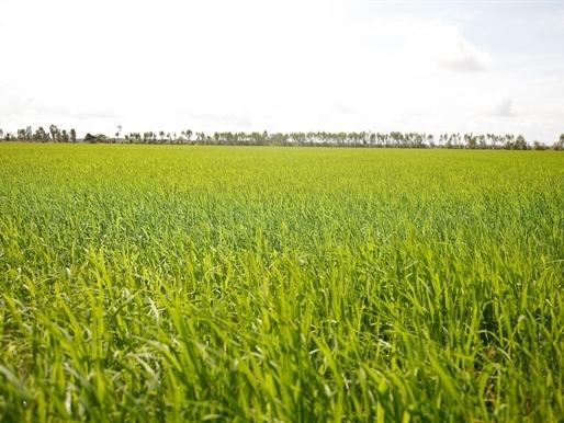 BASF ra mắt sản phẩm giúp trừ bệnh đạo ôn và tăng năng suất cho cây lúa