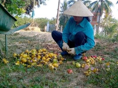 Doanh nghiệp Việt tự triệt nhau