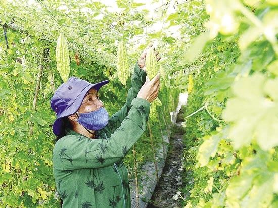 Tìm cơ hội cho hạt giống nội