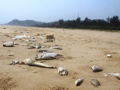 Chiều 30/6 công bố nguyên nhân cá chết bất thường ở miền Trung