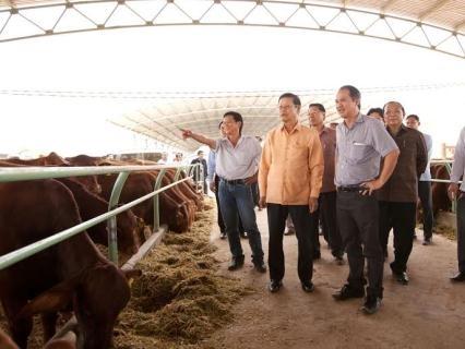 Bầu Đức sắp chế biến thịt bò, trồng chanh leo, sầu riêng